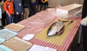 魚の解体ショー