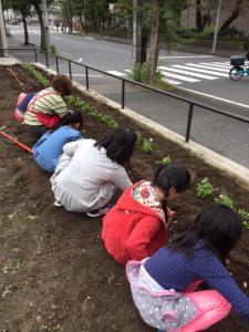 南太田公園花植え活動